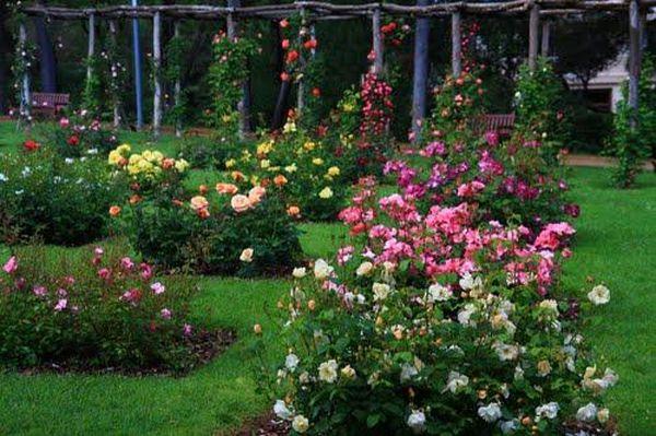 Парк роз в Барселоне * 2