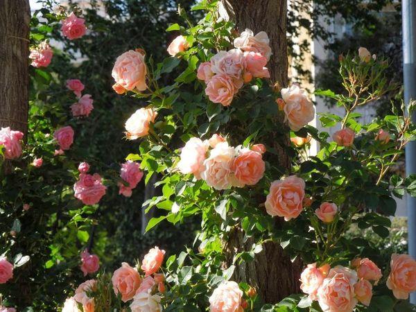 Парк роз в Барселоне * 3