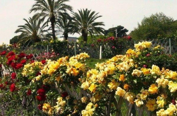 Парк роз в Барселоне * 4