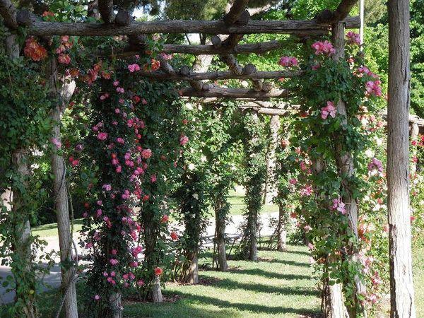 Парк роз в Барселоне * 6